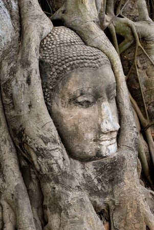 entangled: This image shows a Buddha Face entangled in branches (Wat Mahathat - Ayutthaya) Stock Photo