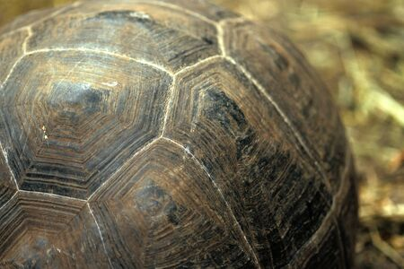 ancient turtles: This image shows a Tortoise Shell