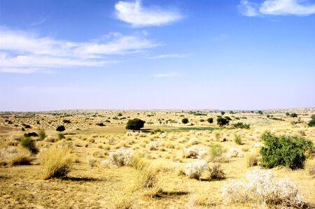 thar: This image shows the arid grassy landscape of Indias Thar desert. Stock Photo
