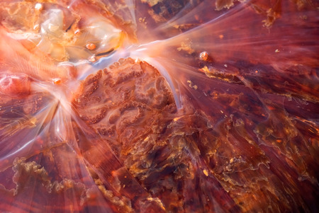 animal vein: This image shows the insides of a jelly fish Stock Photo