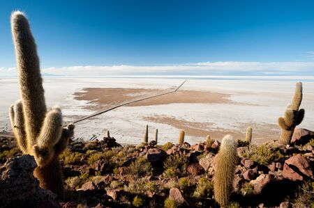 salar de uyuni: Cactus on the border of Bolivias Salar De Uyuni Stock Photo