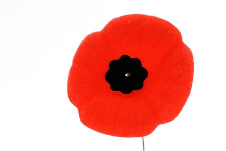 This image shows a Remembrance Day Poppy Stock Photo