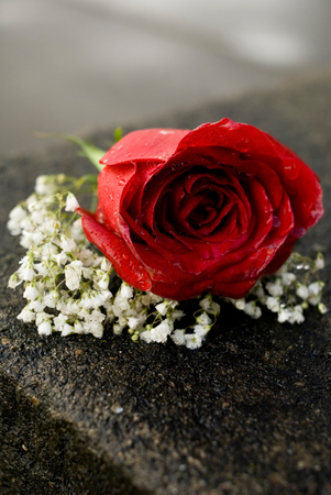 corsage: This image shows a Red Rose Corsage Stock Photo