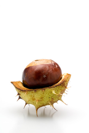 husk: This image shows a Chestnut in a husk