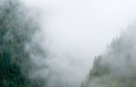 rockies: This image shows Misty Trees - Rockies, Canada Stock Photo