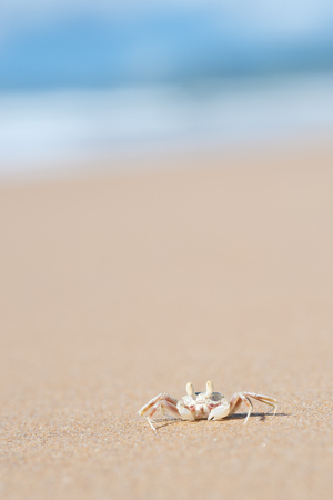 ion: This image shows a Ghost Crab ion Moonee Beach, Australia Stock Photo