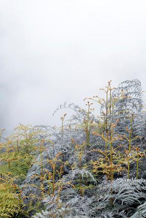 methane: This image shows a Geothermal Smoke pond- Rotorua, New Zealand Stock Photo