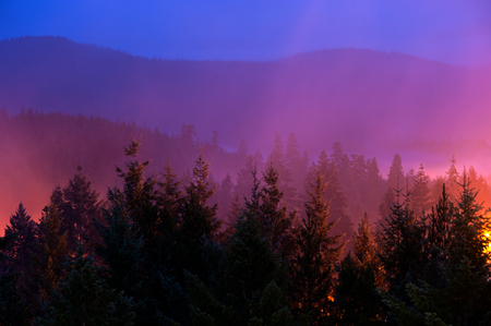 colorfully: This image shows a misty forest scene illuminated colorfully by city lights