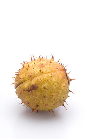 husk: This image shows a Chestnut Husk Stock Photo