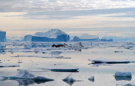 drifting ice: This image shows a bay full of icebergs located in the Northeast Greenland National Park