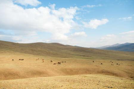 mongolia horse: Landscape of Hustai National Park, Mongolia Stock Photo
