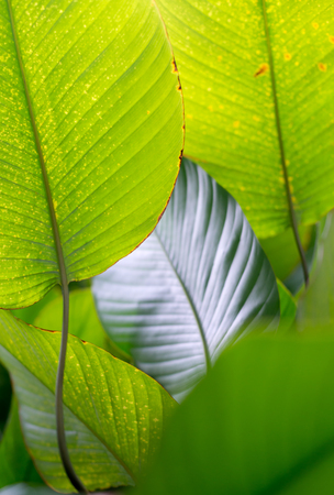 lush: This image shows some tropical leaves in a Singapore garden.