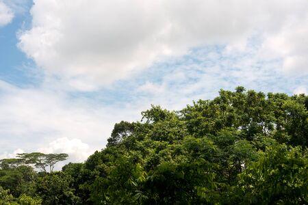vegetation: This image shows the vegetation of Singapore.