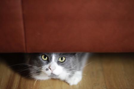 고양이 소파에 숨어있다.