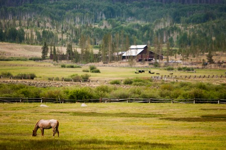 Horse grazing out in a field on a ranch or farm