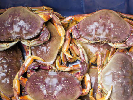 The only fresh water dungeness crab in the world on the West Coast Trail of Vancouver Island, BC, Canada. A group of crabs by the local First Nations