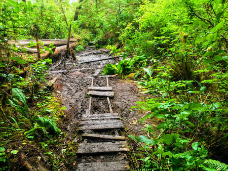 old rundown path along the west coast trail on Vancouver Island, Canada
