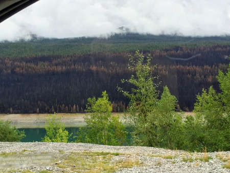 Jasper, Alberta, Canada Peru - August 15th, 2015.  A view of the forest fire damage that has devastated British Columbia and Alberta while driving through Jasper National Park