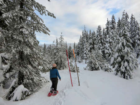 A snowshoer walking and admiring the stunning beauty of the winter landscape on Cypress Mountain as she hikes through groves of Cedar, Hemlock, and Douglas fir trees covered in freshly fallen snow.