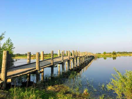 An old small long wooden foot bridge  cross over a beautiful marshy pond on a beautiful summer evening in Edmonton, Alberta, Canada Фото со стока