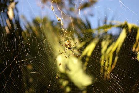 botanic: spider sydney botanic garden Stock Photo