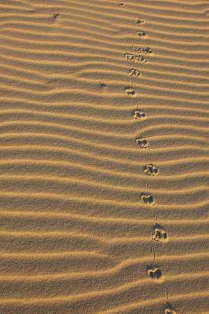 footprints in sand Stock Photo - 893933
