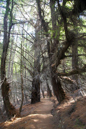 forested: forested path, new zealand Stock Photo