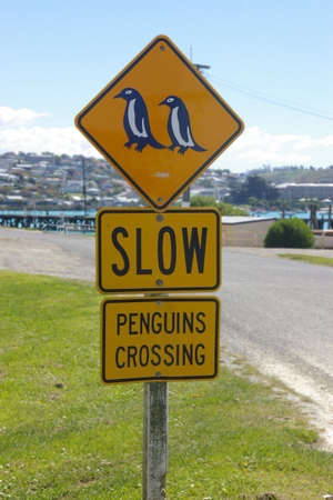 birdlife: penguins crossing sign, new zealand