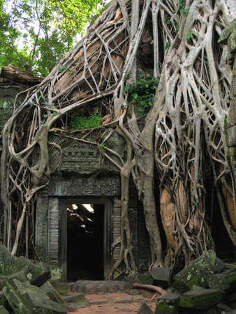 drowned: roots consuming temple