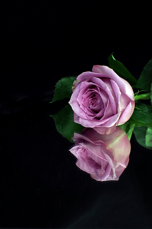 Single pink rose reflected in a mirror against a black background