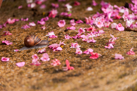 A snail slowly crawling across a patio strewn with flower petals from the rain