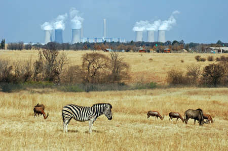 powerstation: Coal Powerstation in Africa with wildlife in the area