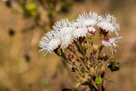 Flowers of the desert