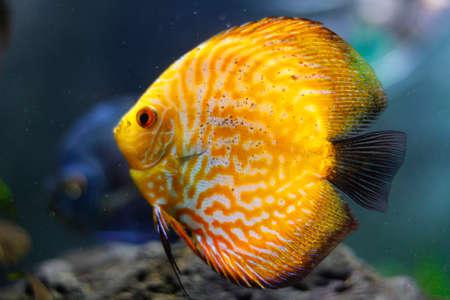 Yellow fish under water