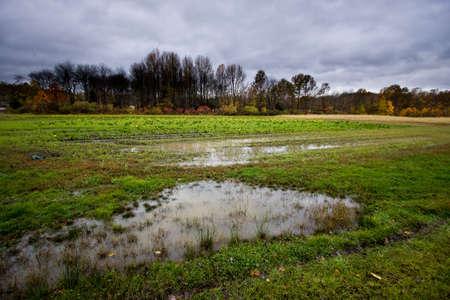 soggy: Soggy Landscape
