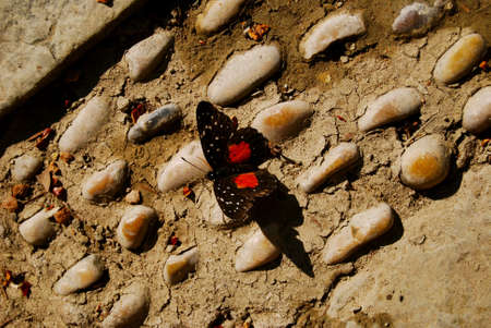 beach butterfly: Butterfly aligned with pebble stone beach