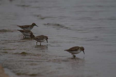 water birds: Water birds at Gibbons Creek near Carlos, Texas Stock Photo
