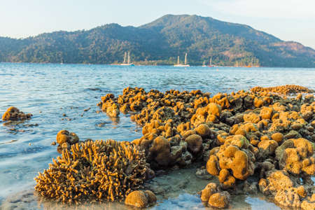 February 2019. Ko Lipe Ko Lipe Tarutao National Marine Park Thailand. A view of exposed coral on the beach on Ko lipe in Thailand. Фото со стока