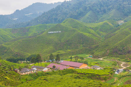 Cameron Highlands Malaysia. 10 March 2019.Tea plantations in the cameron highlands in Malaysia 에디토리얼