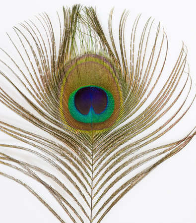 irridescent: Close up of an irridescent peacock feather Stock Photo