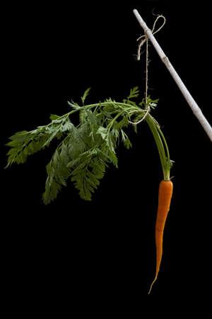 zanahorias: Zanahoria unido a un palo con una cuerda sobre un fondo negro de nuevo. Met�fora inspiradora