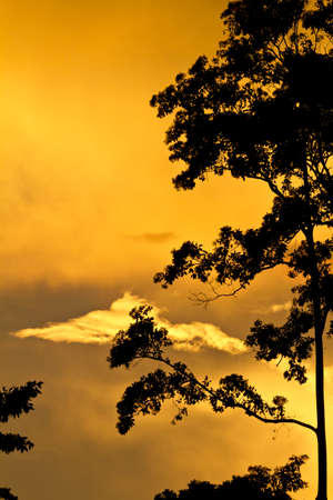 amber light: Tree  silhouetted against golden clouds and sunset with copy space Stock Photo