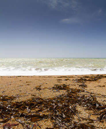 durdle: Deserted beach at Durdle Door,Dorset UK, with fresh seaweed strewn across the foreshore on a sunny spring day