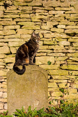 burial: Tabby cat sunning itself sat on an old worn tombstone