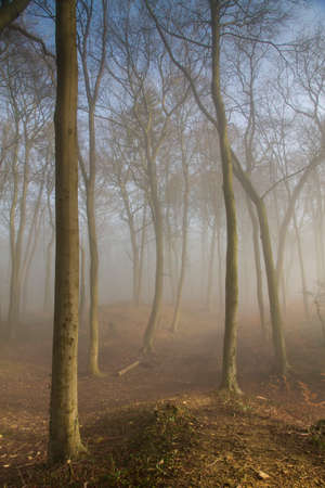deciduous woodland: Misty late winters day in an English deciduous woodland Stock Photo