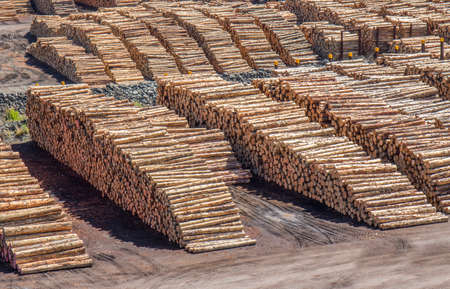 Dockside lumber yard with large piles of prepared tree trunks Stock Photo