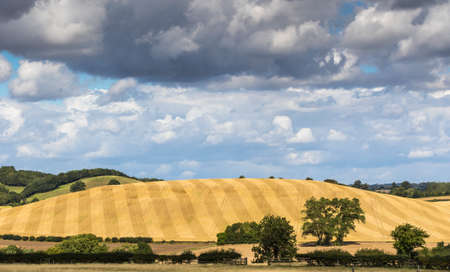 hedgerow: Beautiful English landscape with striped hill after harvest, trees and hedgerow under a broad cloud studed blue sky