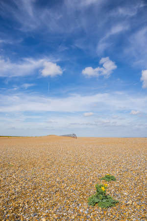 shingle beach: Shingle beach with single plant with yellow flower in foreground and rusting sea defences on horizon against azure blue summer sky with wispy clouds