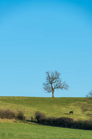 Single leafless tree on horizon in winter with grazing bay horse