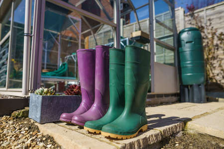 Close up of a pair of purple and green Wellington Boots stood outside a green house in a garden Stock Photo